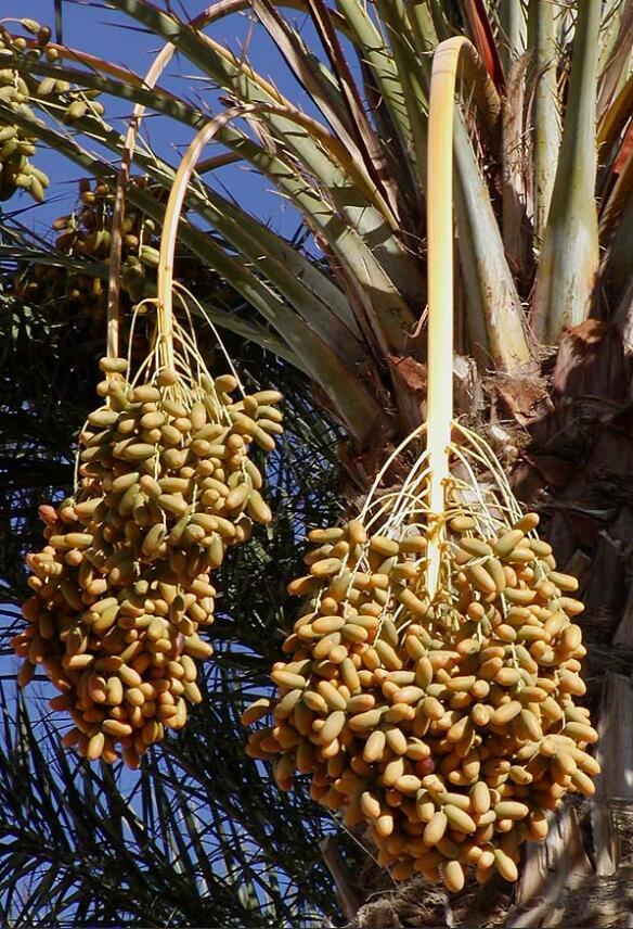 Mauritania Flora and Fauna
