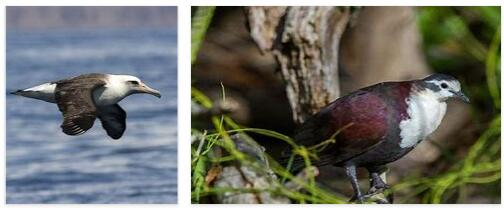 Nauru Animals