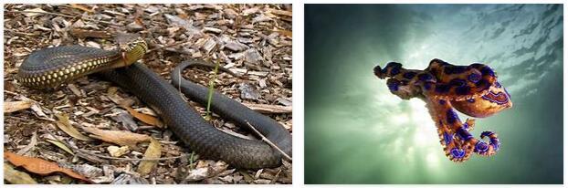 Poisonous Animals in Australia