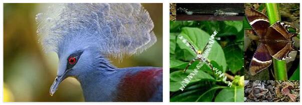 Vanuatu Animals