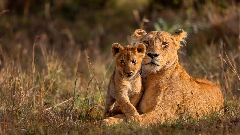 Family Safari With Train & Beach in Kenya