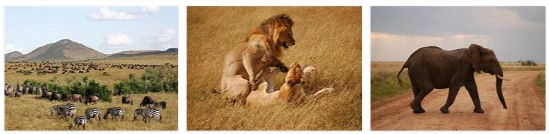Masai Mara National Park in Kenya
