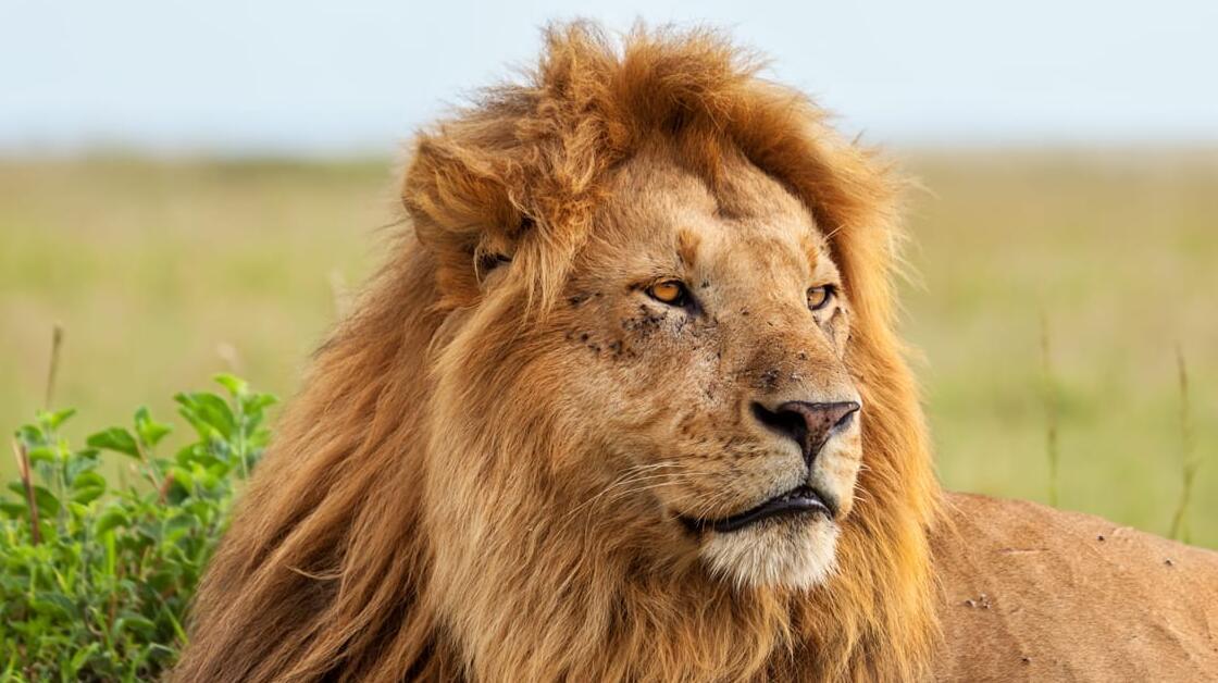 The Ultimate Safari in Kenya